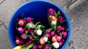 eimer mit bunten tulpen dankeschön spende