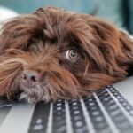 Hund legt Kopf auf Laptop