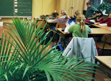 Pflanze im Klassenraum